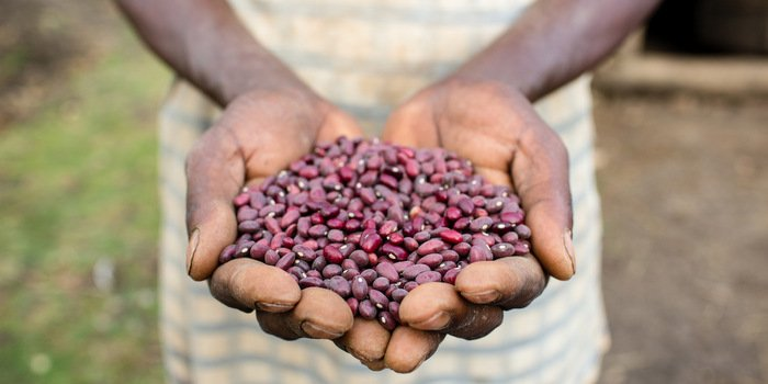 Ethiopia Ag Loan Inputs