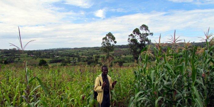 Field Manager Josphat compares non-Nuru (left) to Nuru crop yields (right) (Nuru Kenya).