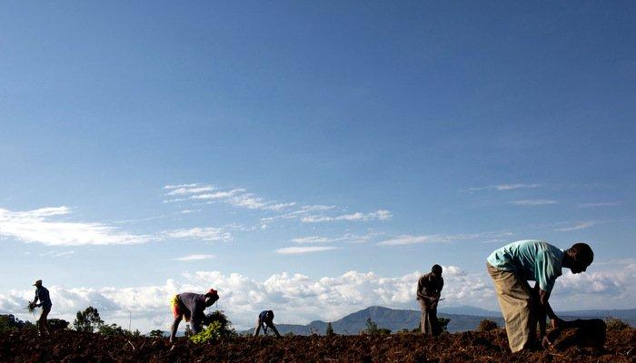 Nuru Ethiopia Agriculture