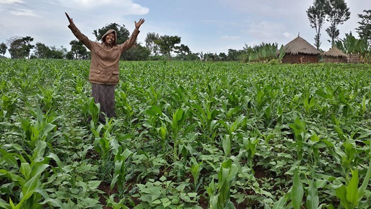 Nuru Ethiopia Agriculture Field Officer Banchi rejoicing over the healthy crops in one of her farmer's fields.