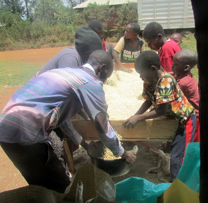 Farmers sieve the maize kernels through a screen to remove impurities such as soil, vegetation or pebbles. Producing high quality maize helps farmers fetch a better price at market. By applying these practices at home, farmers are able to store their grain longer and more reliably.