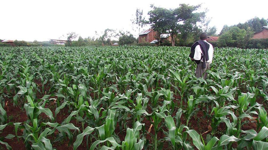 Nyamohanga_farm