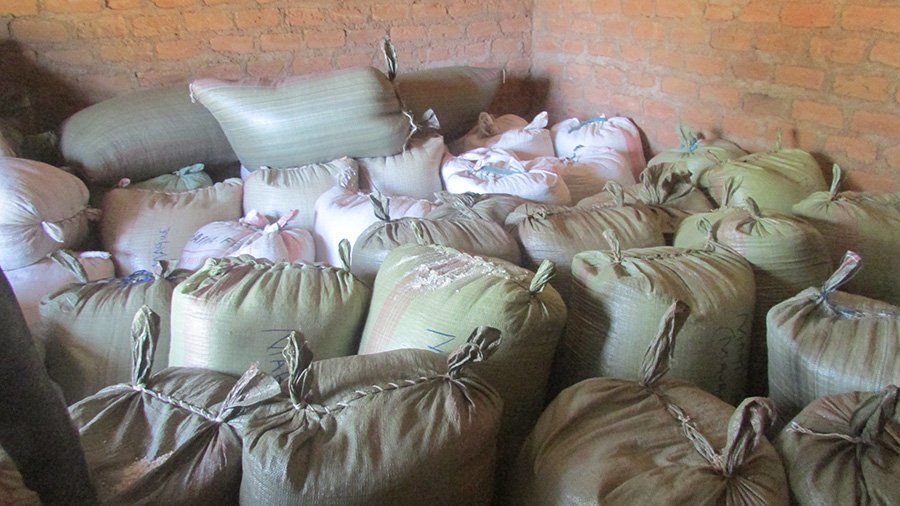 Maize aggregated from members of the Mabera Cooperative, established by Nuru Kenya