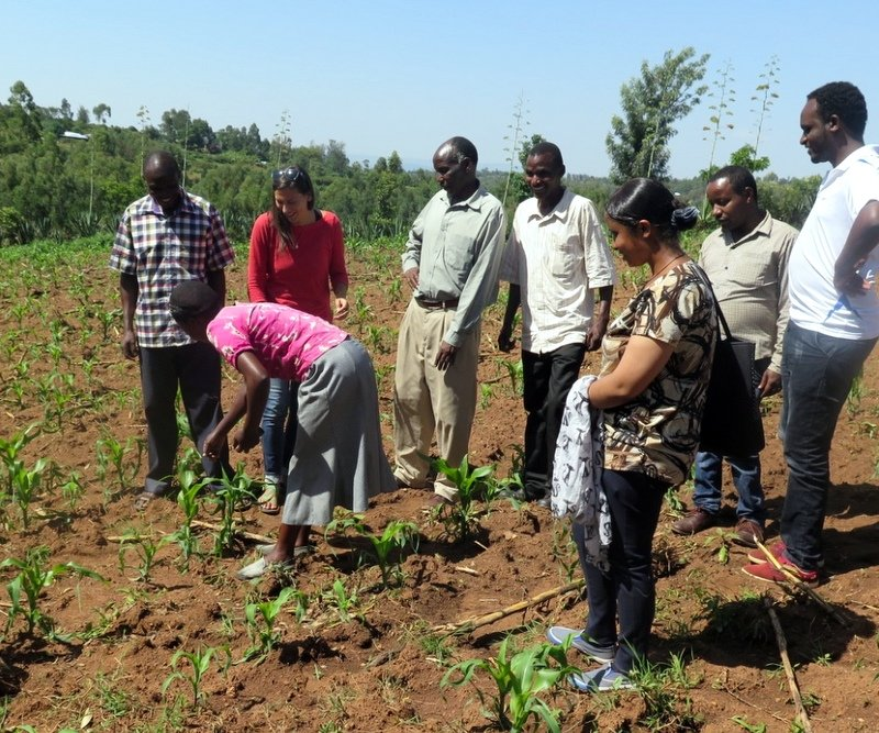 Nuru Ethiopia team visits the field and learns from Nuru Kenya farmers